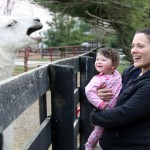 Laughing-Llama
