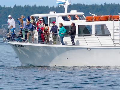 whale watching boat off san juan island guest see whales photo