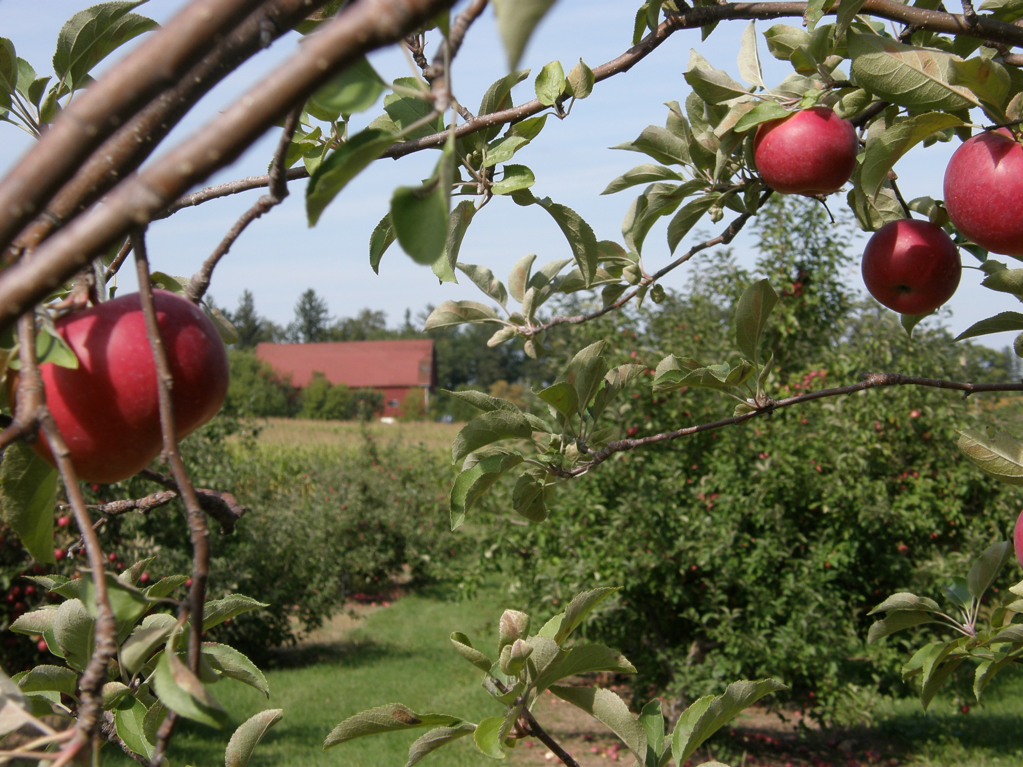 Apple Orchards near Madison WI