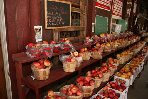Apples and Peaches are ripe at Saunders Brothers