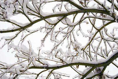 branchsnowlogo
