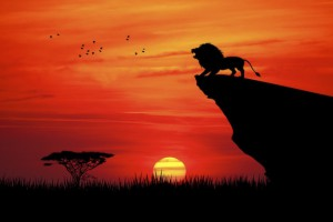 lionhill