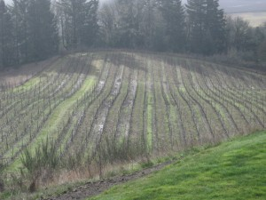 vineyard pruned 002