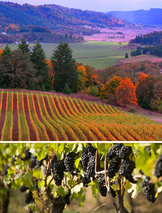 Oregon Wine country fall