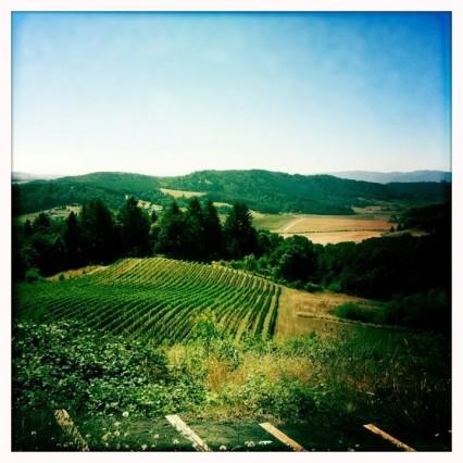 Youngberg Hill Vineyard