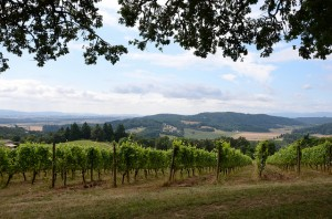 July Vineyard and Inn Blog- Pic 1