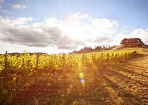 Fall Oregon Wine Country - at Youngberg Hill Inn and Winery