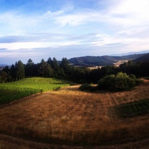 Youngberg Hill Wine Harvest