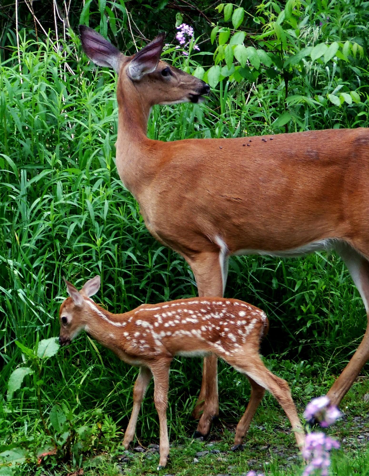 The animals on washingtons farm george washingtons mount vernon buycottarizona Images