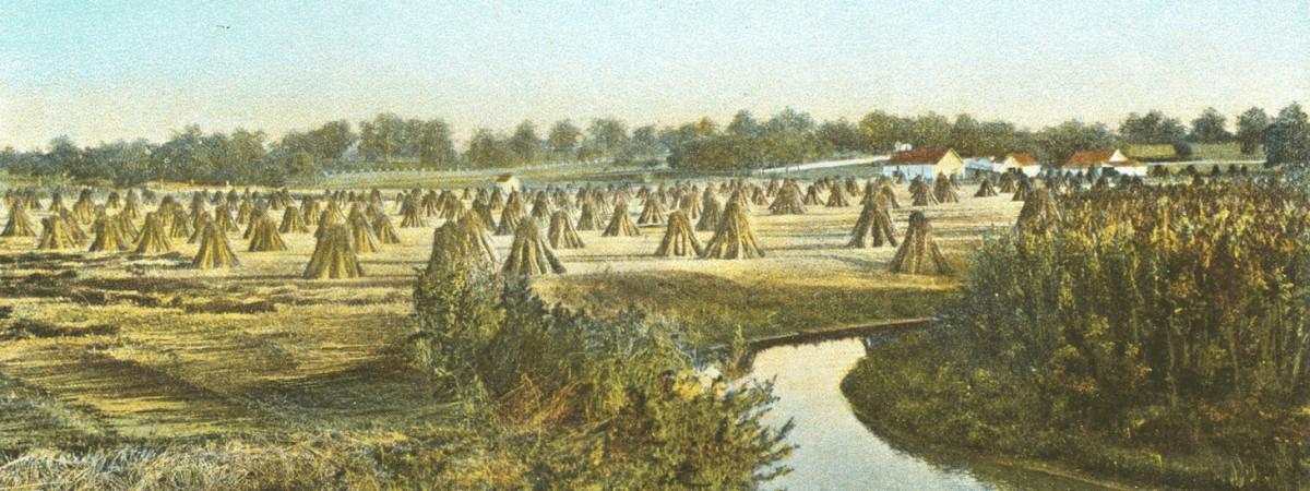 George Washington Grew Hemp · George Washington's Mount Vernon