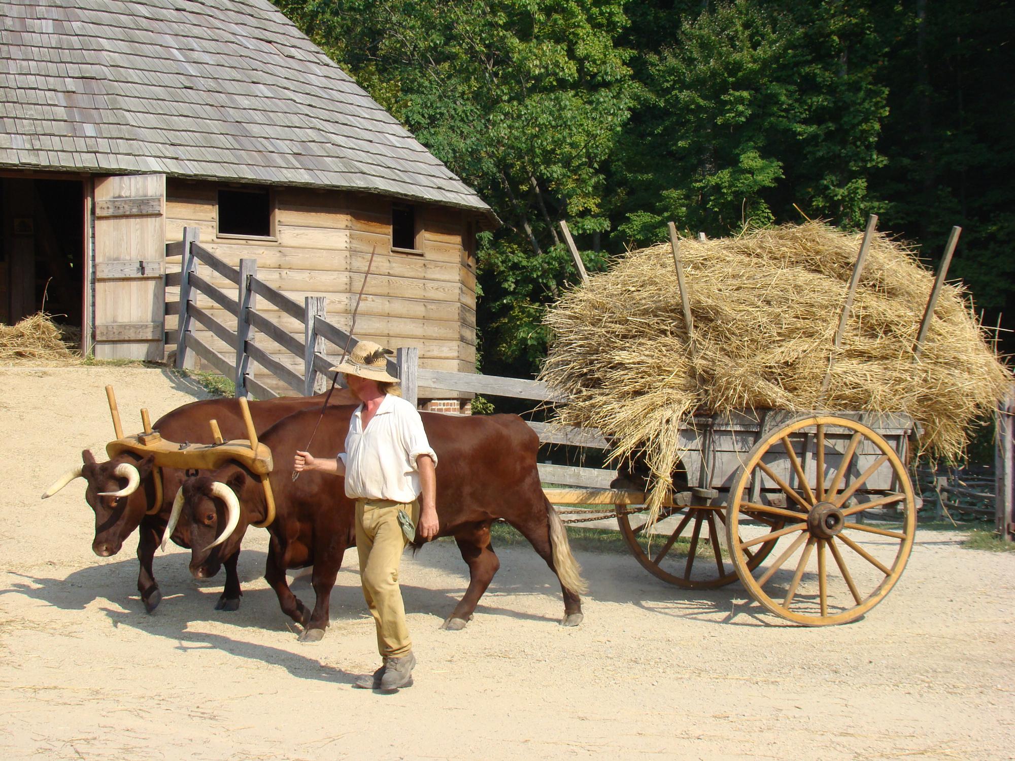 Duke and Earl haul treaded wheat from the 16-sided barn (MVLA)