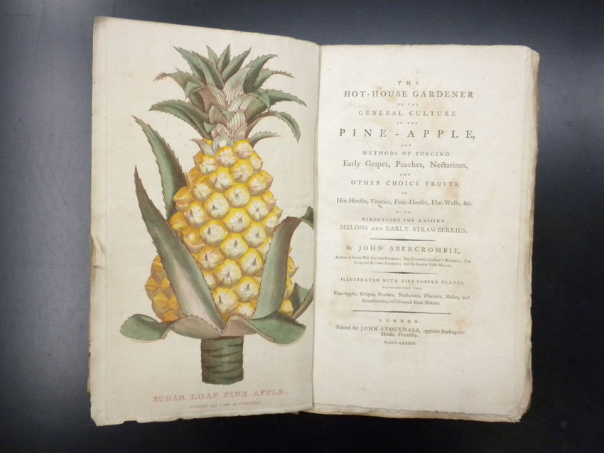 Pineapples George Washingtons Mount Vernon