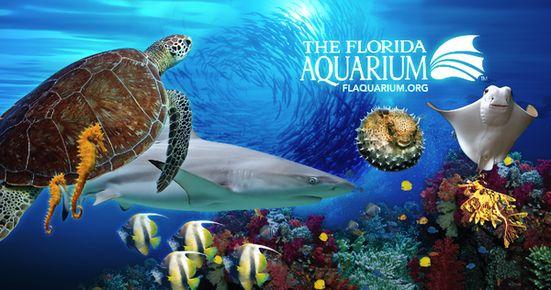 Mother 39 S Day At The Florida Aquarium Tampa Fl May 9