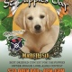 St Puppie's Day at MacDinton's
