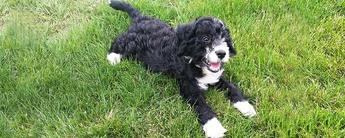 Puppy collar number c007864 20170517 154918
