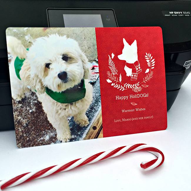 diy pet holiday cards - Pet Holiday Cards