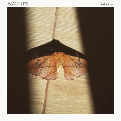 Black lilys   visuel yal%c3%a4kta hdsmall