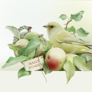 001apple greenfinch23