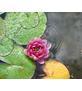 Lotus Vitality- Yoga & Holistic Nutrition Services Logo