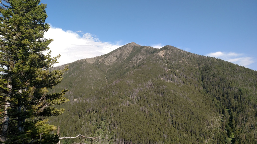 One of the first views of Livingston Peak from the trail.