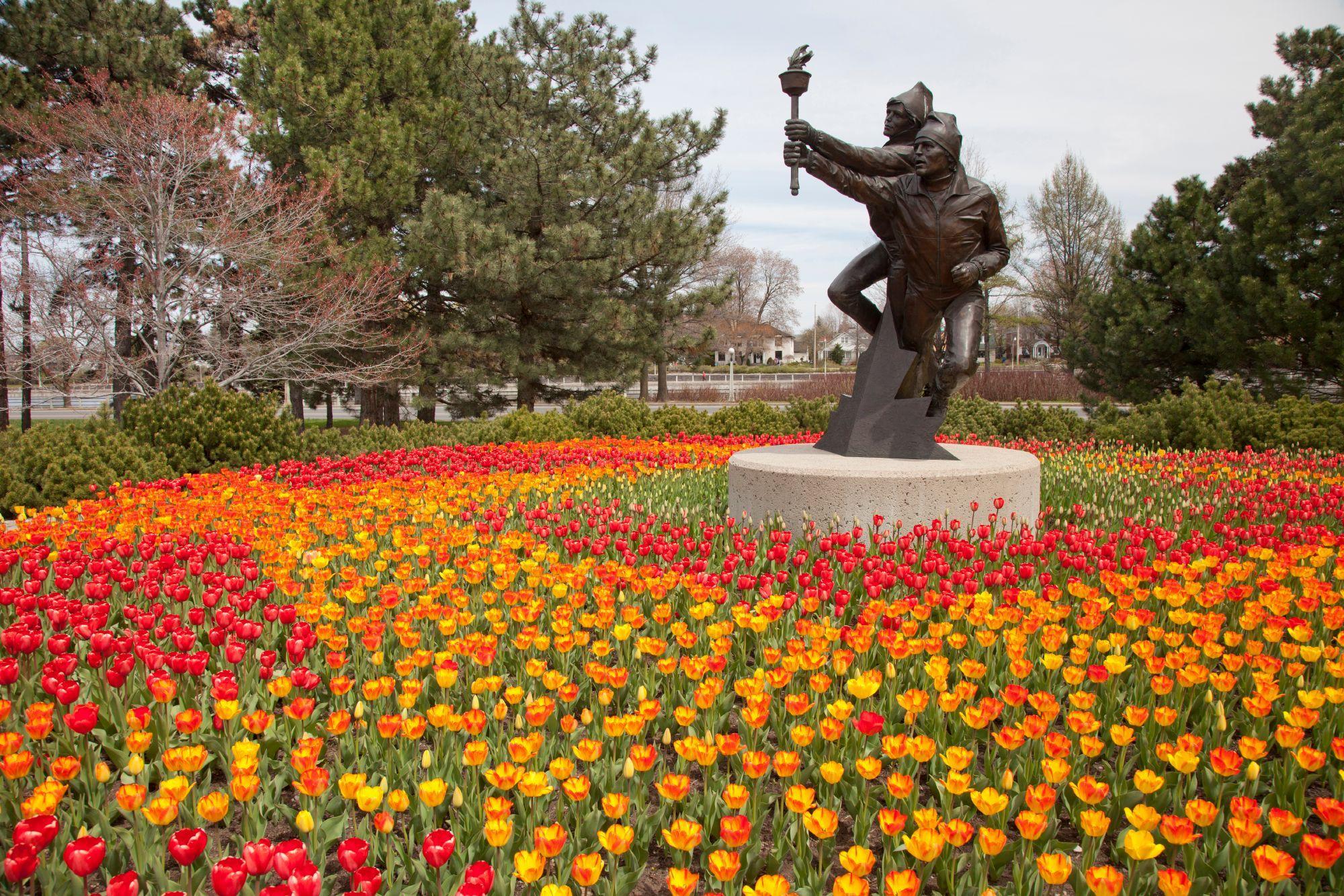tulip tracker