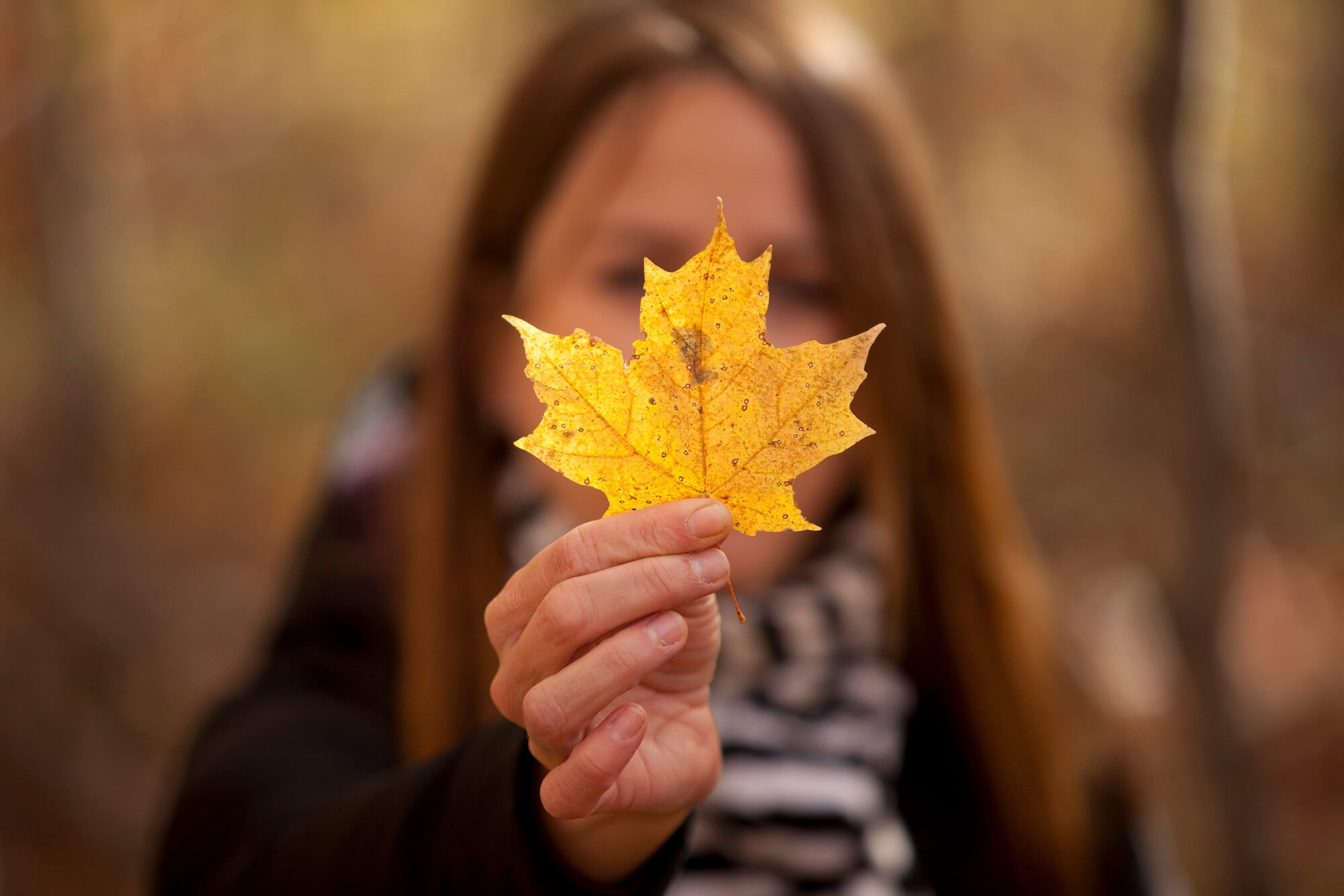 Nature Days at Philippe Lake on October 14 and 15, 2017 as part of Fall Rhapsody.