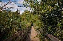 Jack Pine Trails