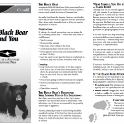 The Black Bear and You