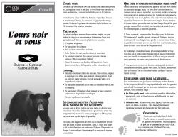 L'ours noir et vous