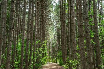 Les cinq plus beaux sentiers de randonnée cachés dans la Ceinture de verdure