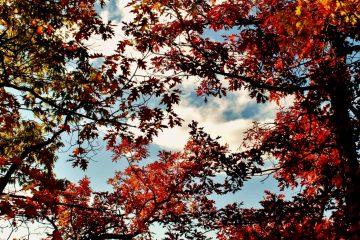 Les collines de l'Outaouais : les plus beaux paysages d'automne