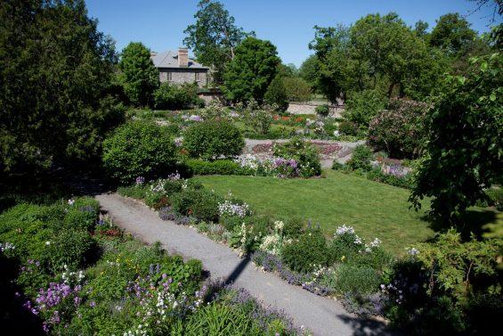 Le jardin de Maplelawn