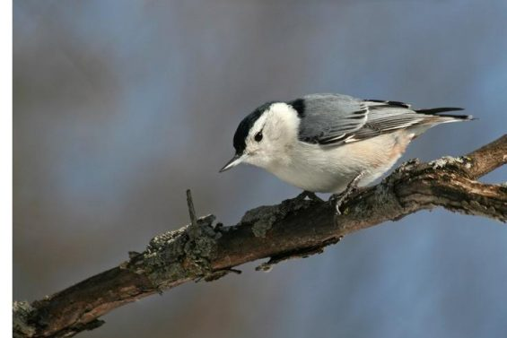 Introduction to birdwatching
