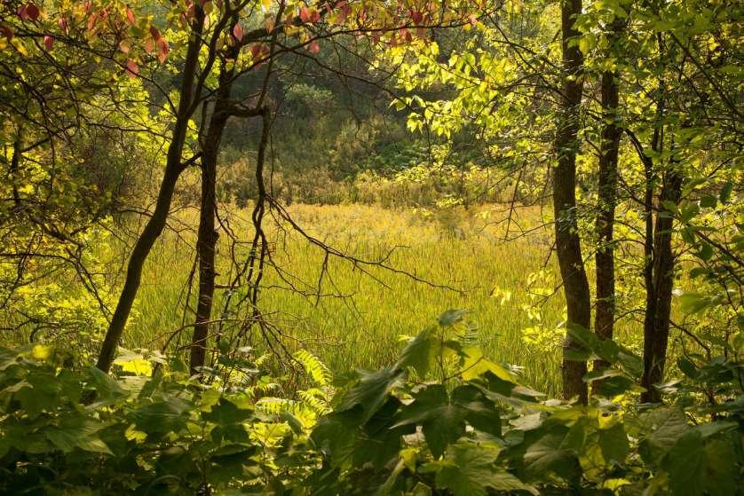 Green's Creek