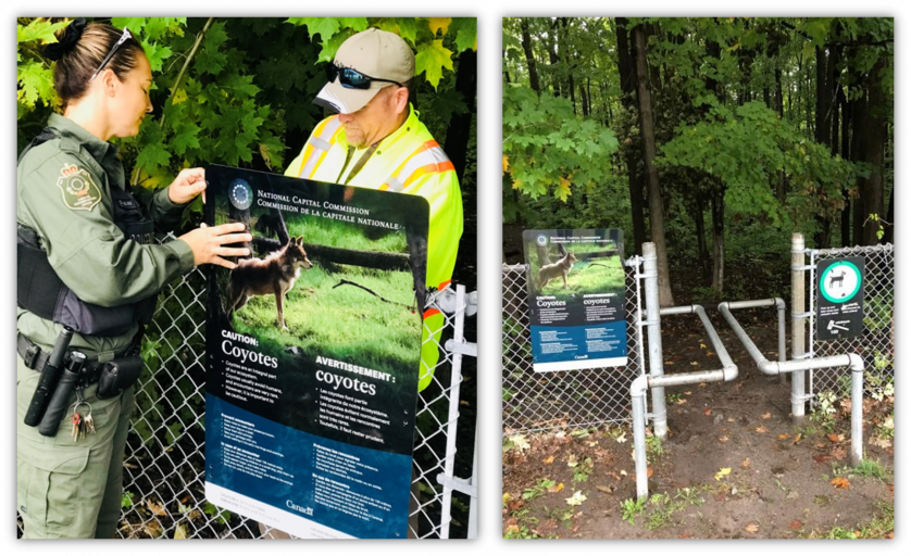 Diane Barbarie, NCC Conservation Officer, installing signage in McCarthy Woods.