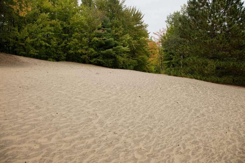 Les dunes de sable de la forêt Pinhey