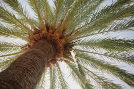 """""""Palm Sunday 2016"""" - Luke 19:28-48"""