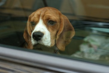 California legalized breaking into car to save animal, what about here?