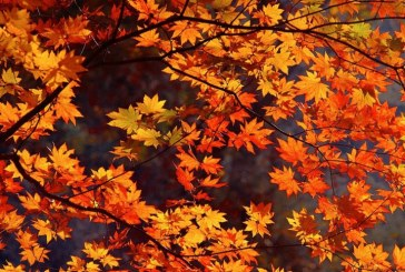 JAROD TANKSLEY: Play up fall's beauty in your home