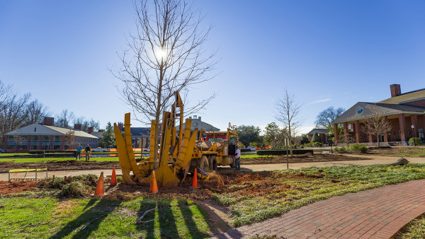 A large tree spade, a planting device like a backhoe, plants a young tree on a sunny day. (size: funews-syndication)