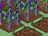 Plant Crops Moy Farm Day
