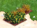Crops in Dinopolis