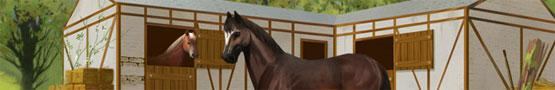 Gry Konne Online - Three Horse Breeds Recommended for Beginners