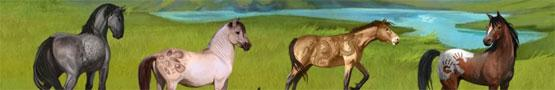 Online Paarden games - How to Take Care of Your Foal in Howrse