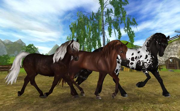New variations for the Icelandic, Morgan and Sport Friesian