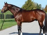 PonyBox Horse Profile