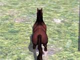 Wild Horse Racing Champions: Derby Action free roam