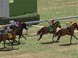 Horse Racing Park Gameplay