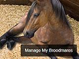 Equination - Managing Broodmares
