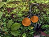 Find Hidden Objects Shadowplay: The Forsaken Island Collector's Edition